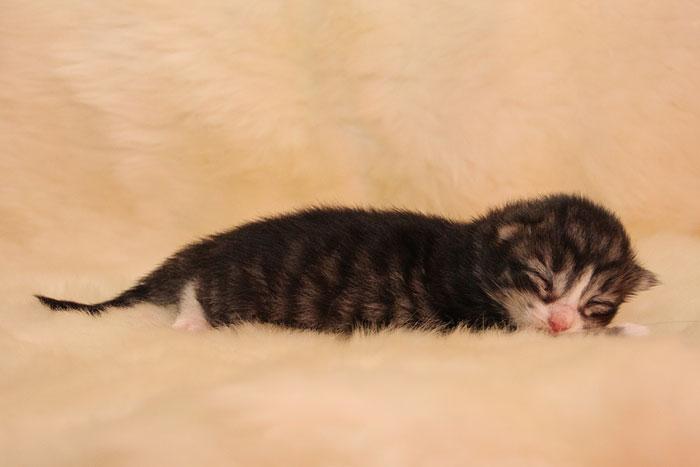 Kitten2_1